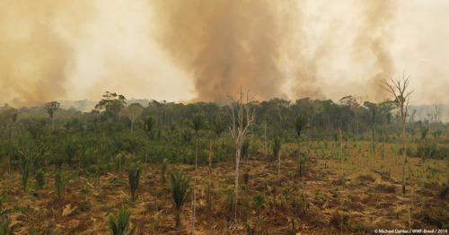 Selon le WWF, des vents extrêmement secs attisent les incendies dans larégion amazonienne.