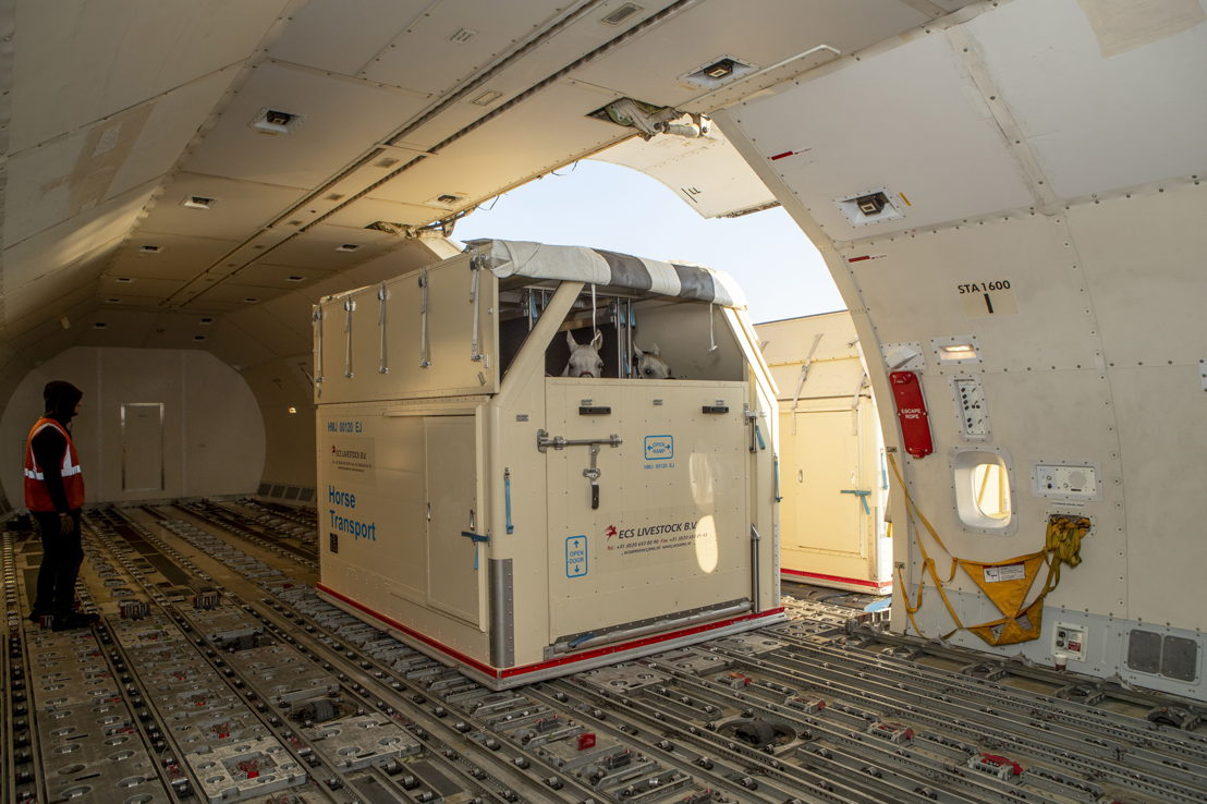 The horses will be transported in a Emirates SkyCargo Boeing 777 freighter<br/>Image courtesy: FEI/Dirk Caremans; FEI/Tori Repole