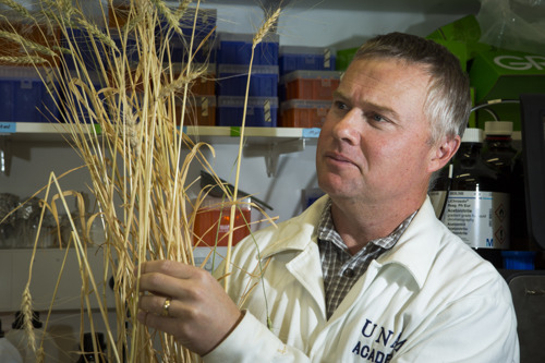 Australian wheat shows resistance to devastating disease