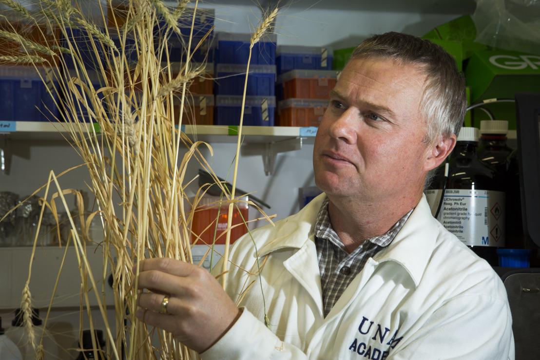 Australian wheat shows resistance to devastating disease