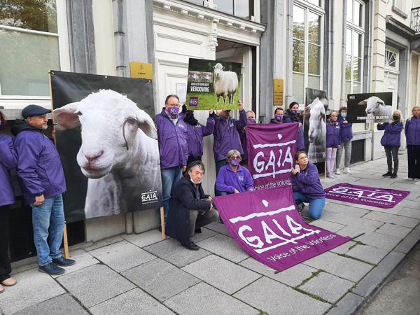 Preview: Plus d'excuses ! GAIA insiste auprès du gouvernement bruxellois d'interdire l'abattage sans étourdissement sans exception pour les rites religieux