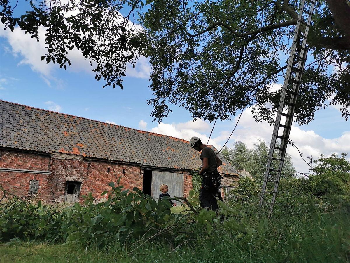 Dries aan het werk als boomverzorger