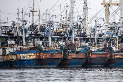 Invoercontroles in belangrijke Europese lidstaten ontoereikend om illegale zeevisproducten te weren