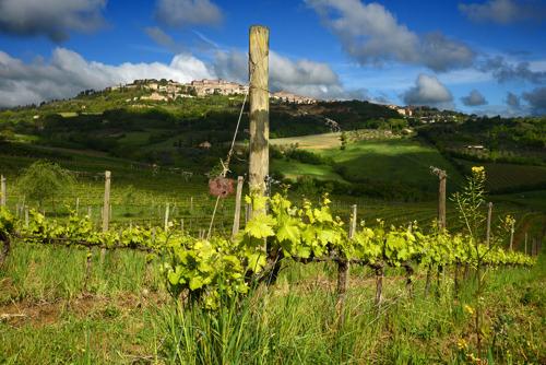 Salcheto veiniistandus: jätkusuutlik mõtteviis, mis edendas rohelist majanduskasvu