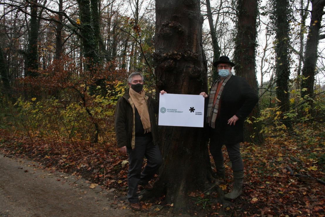Provincie en Bosgroep gaan samenwerken voor meer en beter bos
