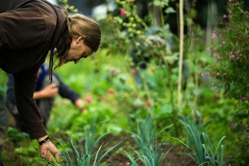 Lever les freins au développement de l'accueil social à la ferme