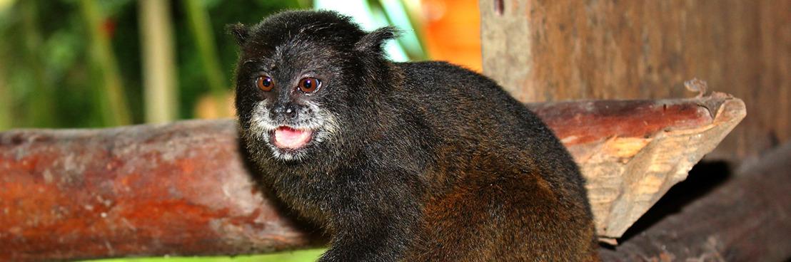 Inheemse groep vangt unieke beelden van fauna in Amazonegebied