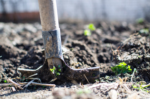 Urban agriculture initiatives in need of more cooperation and support from local authorities