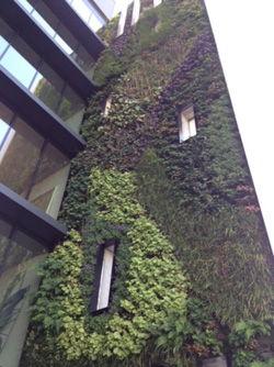 Le jardin vertical traversant le bâtiment