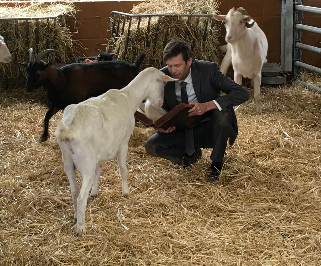 TV-spot van GAIA voor de waardigheid van dieren in de Grondwet
