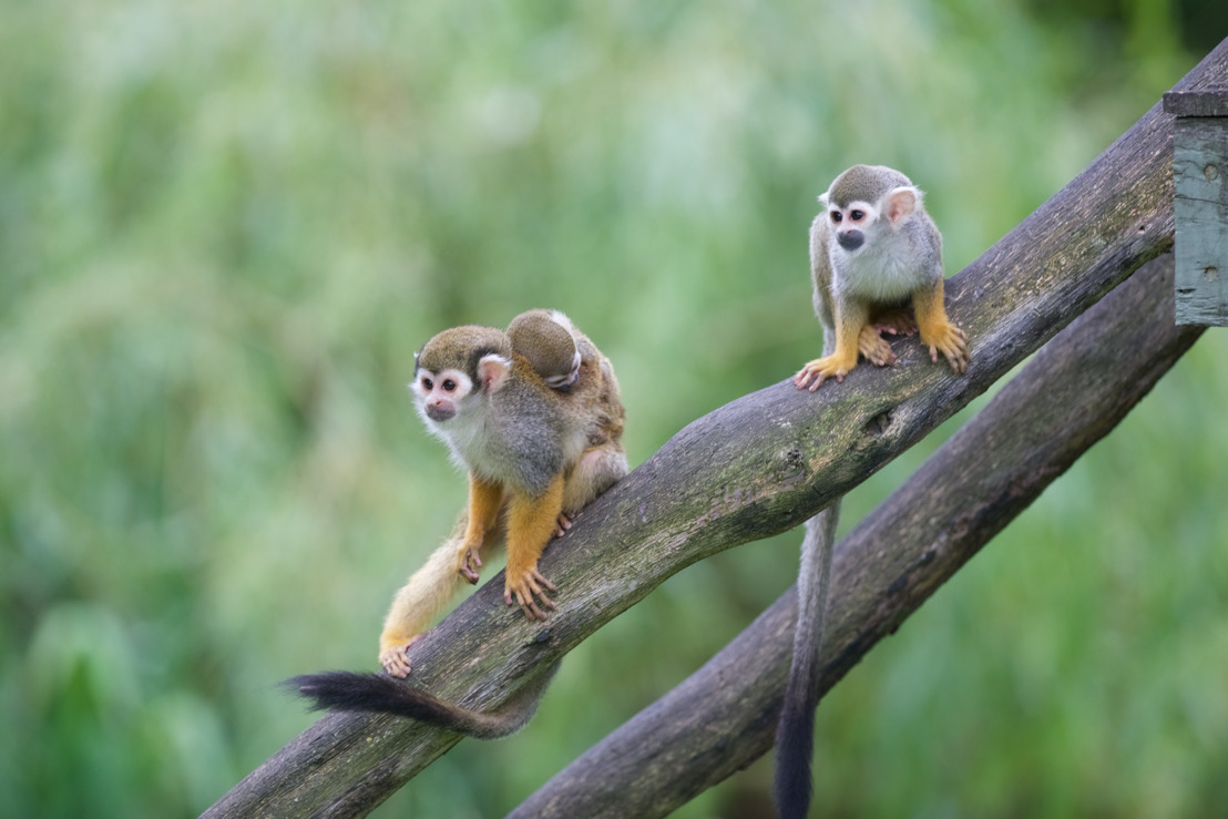 Babyboom in de Olmense Zoo