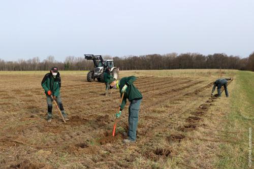 Groenarbeiders planten boompjes in Machelen
