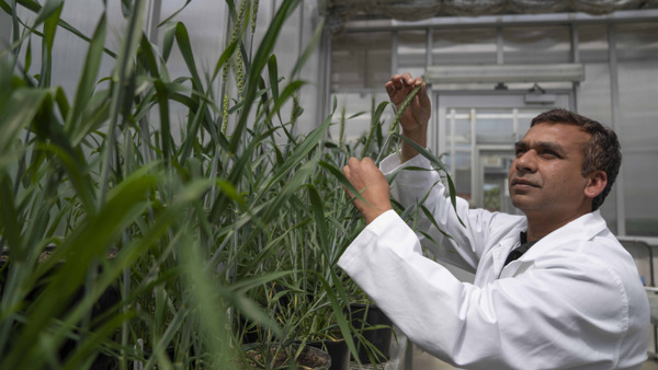 Preview: Scientists find new way to develop drought-resilient crops