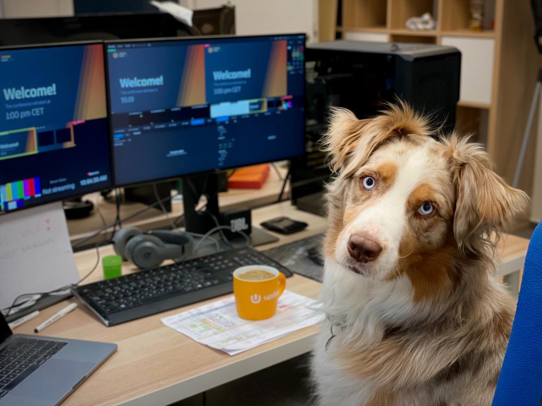 Terug naar kantoor: GAIA spoort werkgevers aan om honden toe te laten op de werkplek