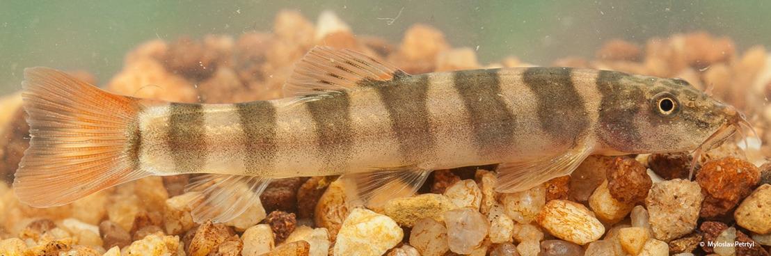 Un nouveau rapport du WWF révèle la découverte de 115 nouvelles espèces dans la région du Grand Mékong