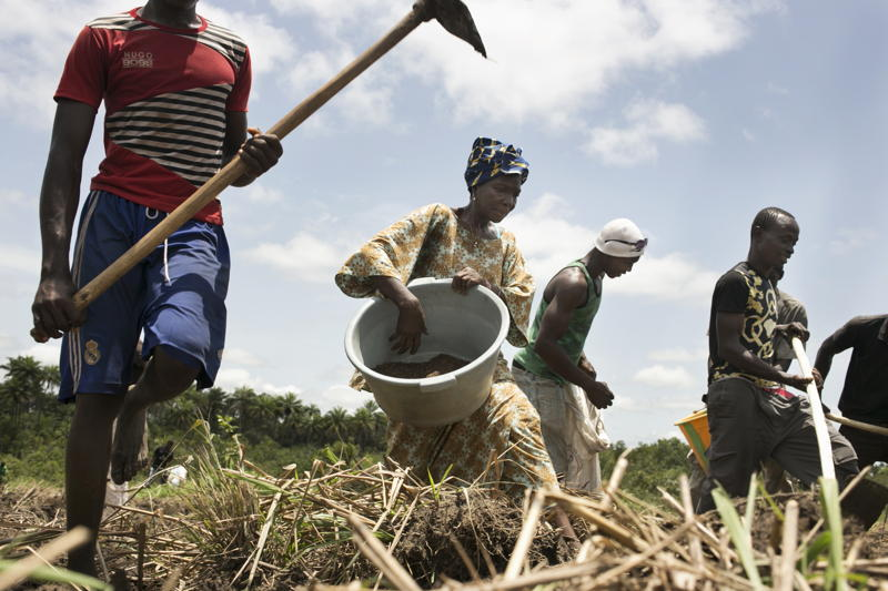 Members of the APGEF - Association des Personnes Guerís d&#039;Ebola de Forecariah (Ebola survivors association of Forecariah) working in a watermelon field. <br/>These Ebola survivors associations are very important to fight against the stigmatisation of survivors and to conduct anti stigma activities with the population. Forecariah area is a mainly rural area were most of the population living from agriculture. Photographer: Albert Masias