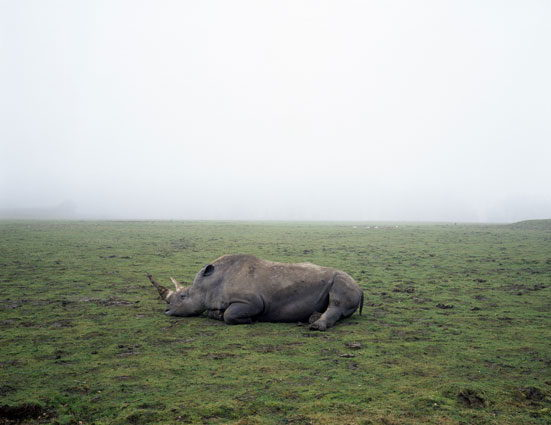 Geert Goiris, Rhino in fog, 2003