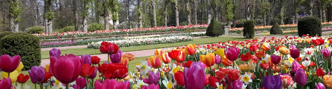 Floralia Brussels: haal je hart op tussen de bloemen