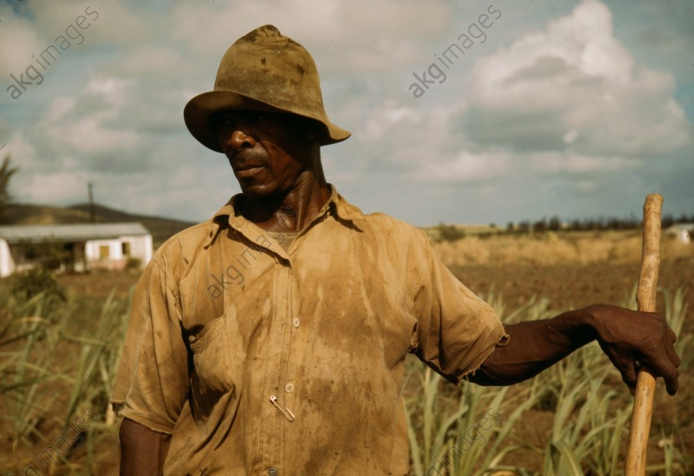 Black farmer, Farm Security Administration borrower, vicinity of Frederiksted, St. Croix Island, Virgin Islands (USA). Photo, December 1941 (Jack Delano)<br/>AKG611675