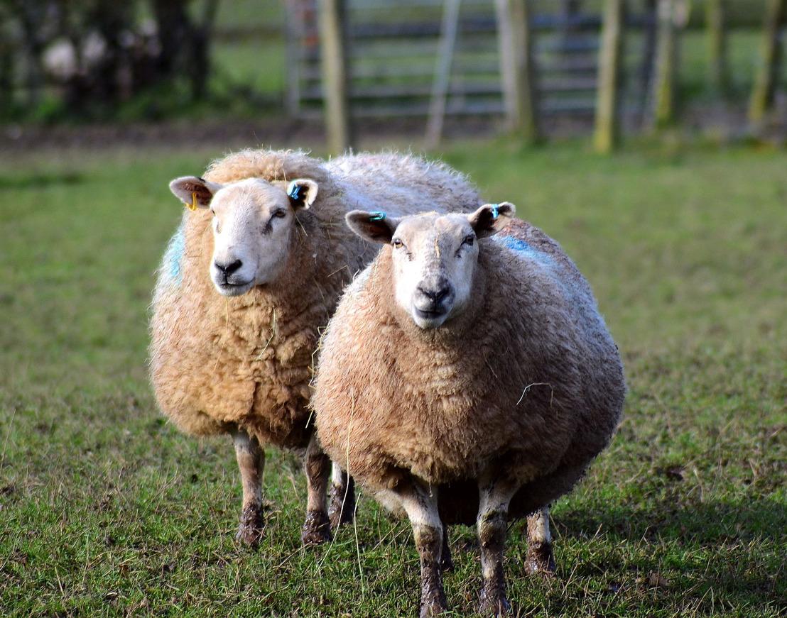 GAIA tevreden met uitkomst extra commissie Dierenwelzijn