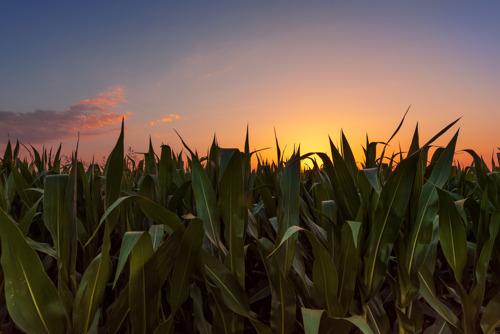 GROWMARK/FS Celebrates 2021 Illinois Master Farmers
