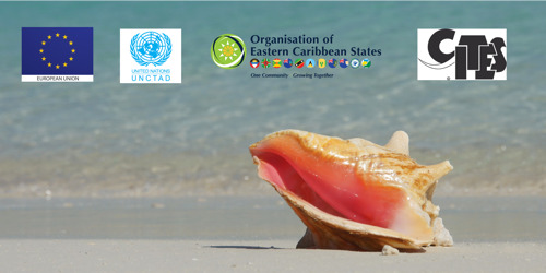 Moving the Queen Conch Industry Forward!