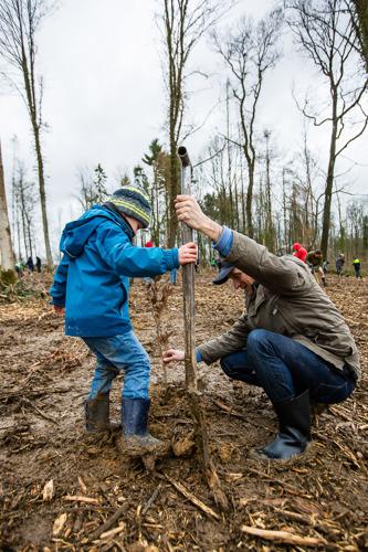 3.000 arbres plantés en un jour à Tinlot sur un total de 18.000 en Belgique grâce à Forest in One Day