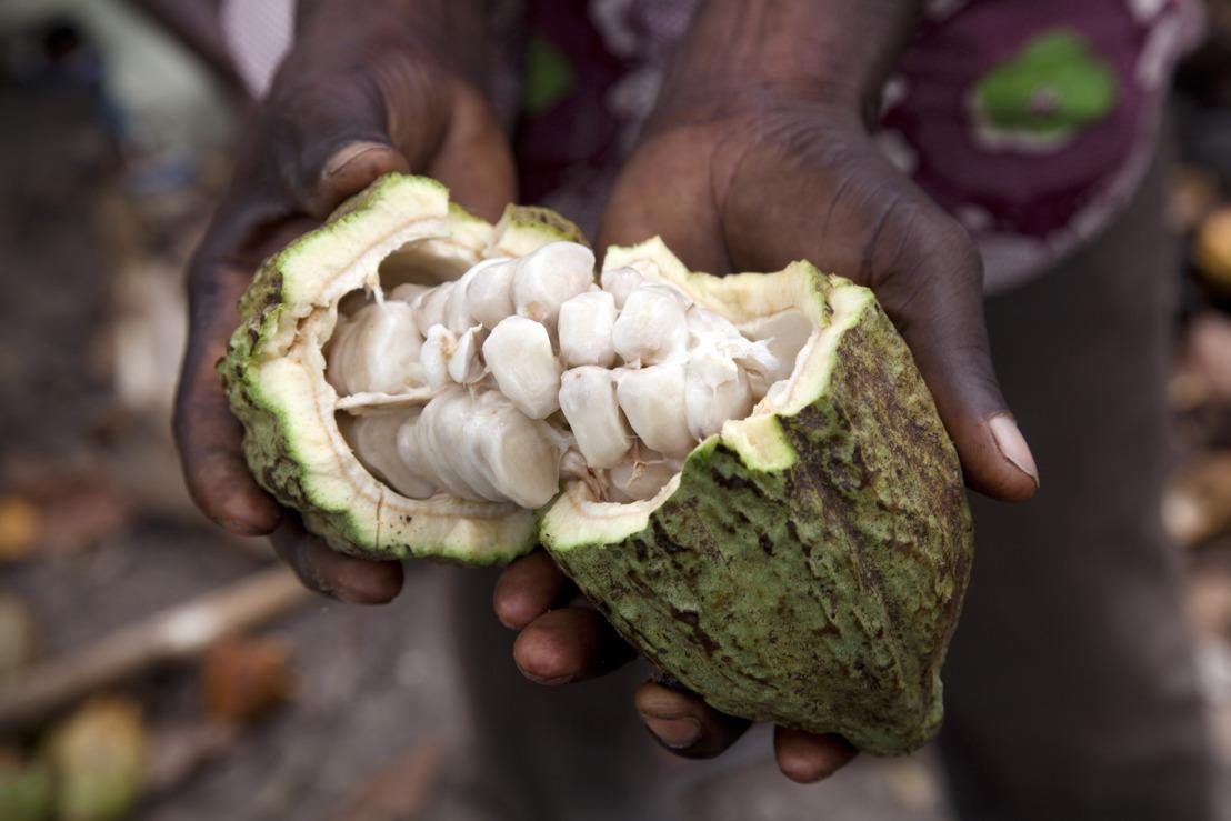 Van mooie beloftes naar ontgoocheling: duizelingwekkende daling van Ivoriaanse cacaoprijzen