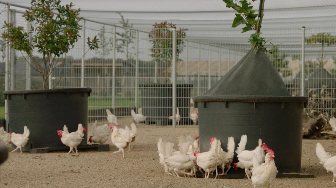 Kipster, l'entreprise d'élevage de poules la plus durable et respectueuse de l'environnement du monde dépose une demande de permis à Peer dans la province du Limbourg