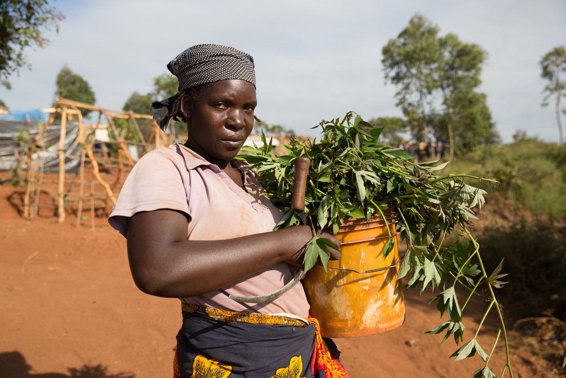 This woman has picked the leaves of Sweet Potato plants to cook with - despite this not being a proper food if eaten alone. Over 5.800 Mozambican nationals have camped in the village of Kapise 2 in Malawi after fleeing their homes in Mozambique, the majority of them women, children and the elderly. They are living in precarious conditions well below the internationally recognized humanitarian standards. © James Oatway / MSF