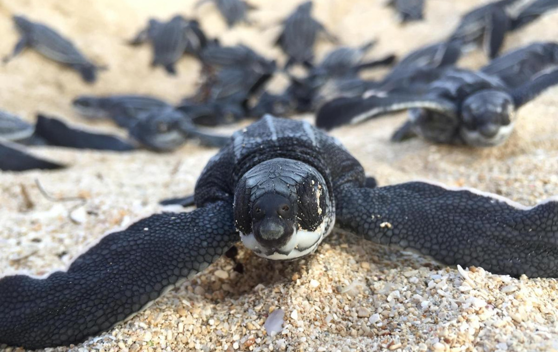Why we need to protect turtles