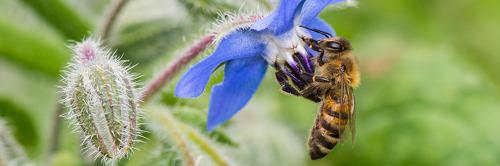 Plus de 80 scientifiques belges signent la lettre ouverte internationale pour la biodiversité.