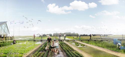 Landbouwinnovatiefonds ondersteunt negen projecten in kader van natuurinclusieve landbouw