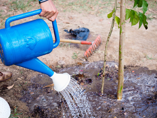 Stad Antwerpen sproeit jonge bomen met gezuiverd afvalwater van Aquafin