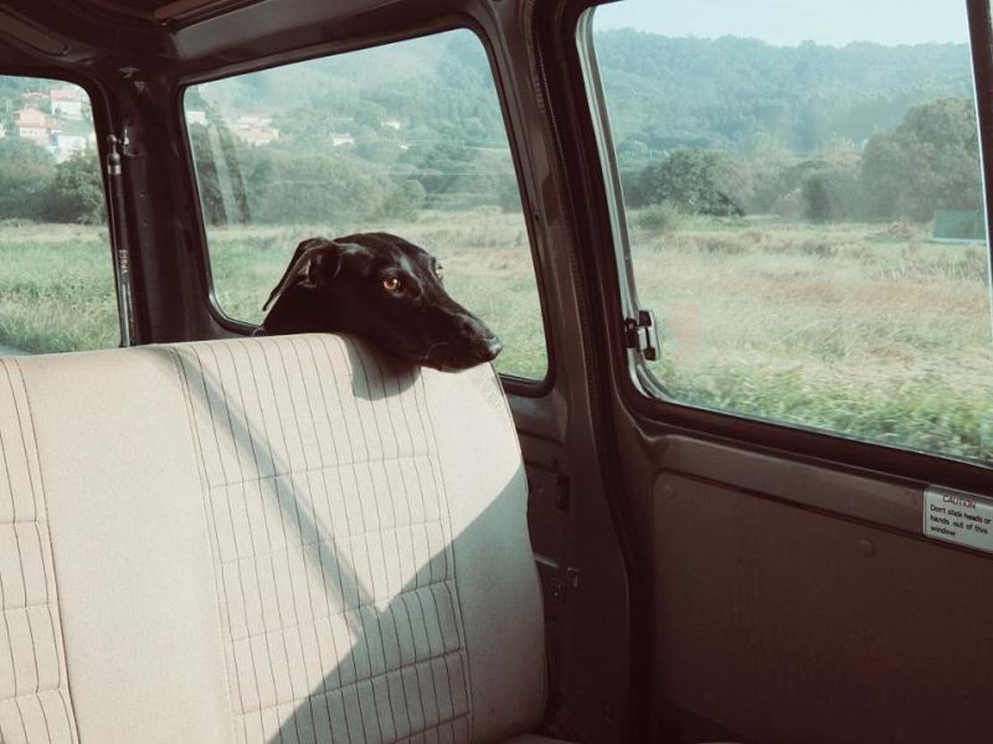 GAIA dient klacht in tegen dame die hond liet sterven in snikhete wagen