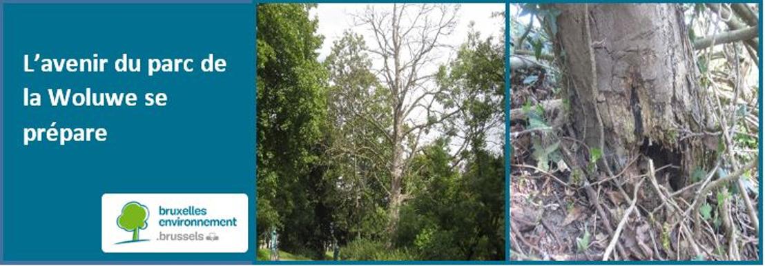 Le parc de la Woluwe s'offre une cure de rajeunissement au profit de la biodiversité et de la sécurité des usagers