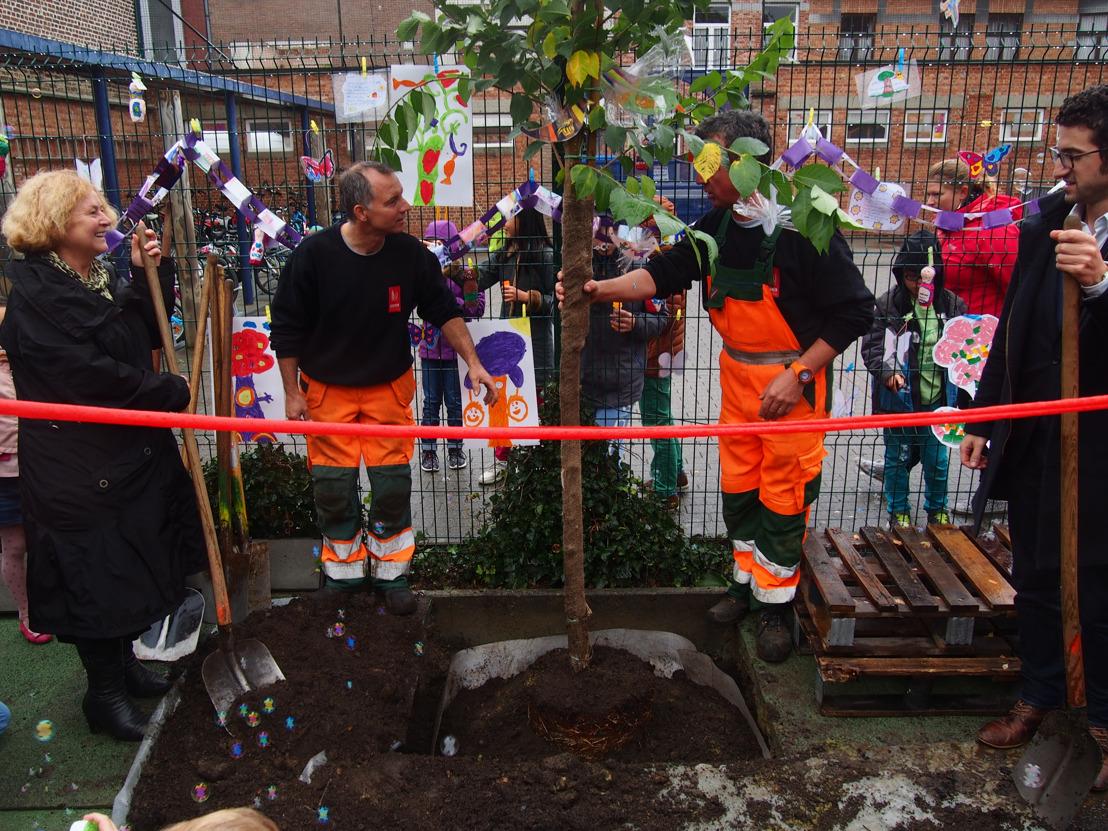 De Sint-Lambertusschool in Heverlee en M planten samen een geluksboom