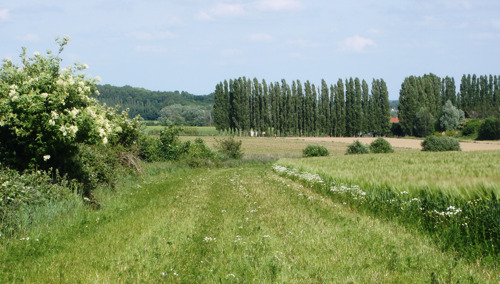 Waarom u grasstroken op landbouwpercelen niet mag gebruiken als doorgang
