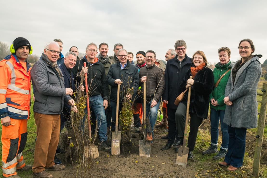 100.000ste haagplant in Zuid-Hageland