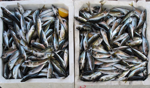 Anguilla and Montserrat strengthen capacity to mainstream climate change adaptation in their fisheries sectors