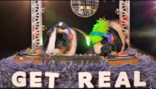 Guinea Pig DJs Star in Get Real's Jolean Music Video