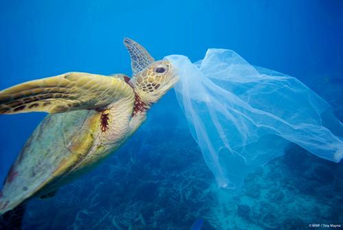 De Middellandse Zee dreigt 'zee van plastic' te worden, waarschuwt WWF.