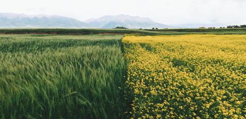 Europese 'Boer tot Bord' en biodiversiteitsstrategie: een kans die we met beide handen moeten grijpen