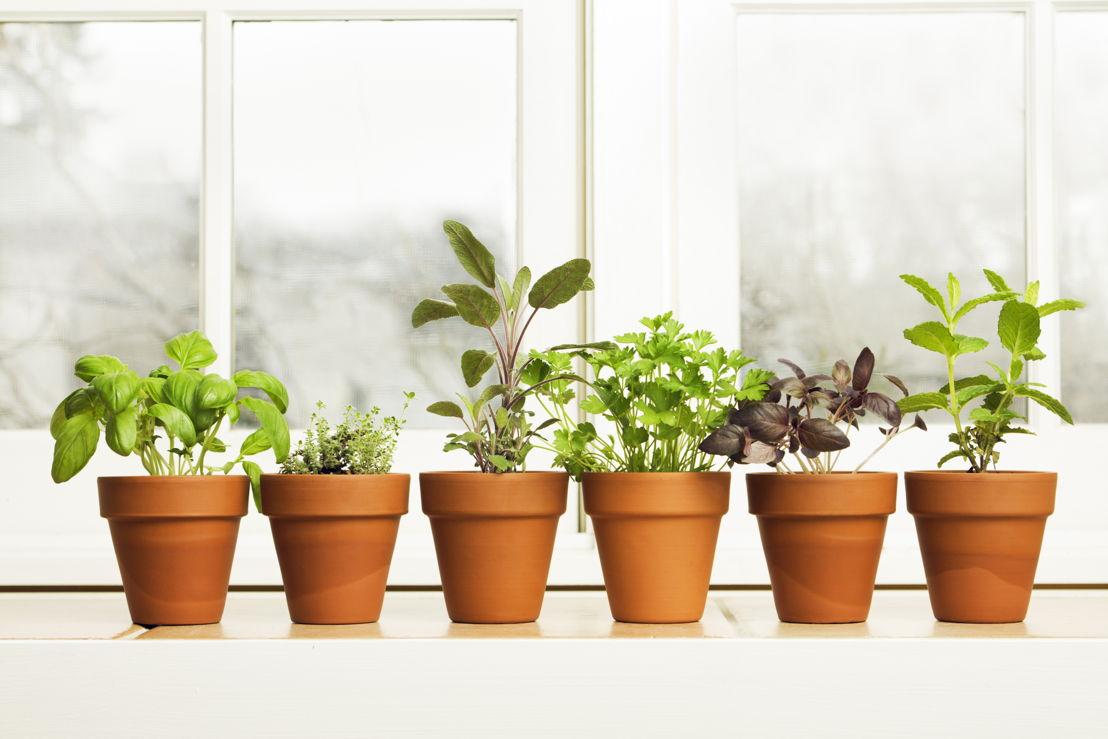 Herbs + The Five Senses (photo credit Pike Nurseries)
