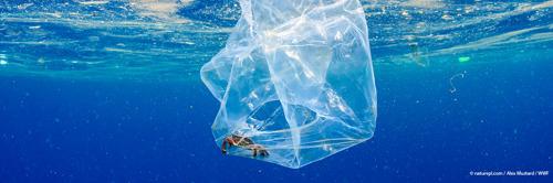 En cette journée mondiale sans sac plastique, le WWF lance sa campagne d'été contre la pollution plastique.
