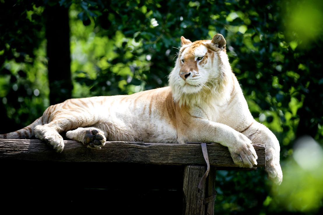 Elk diertje zijn pleziertje in de Olmense Zoo!