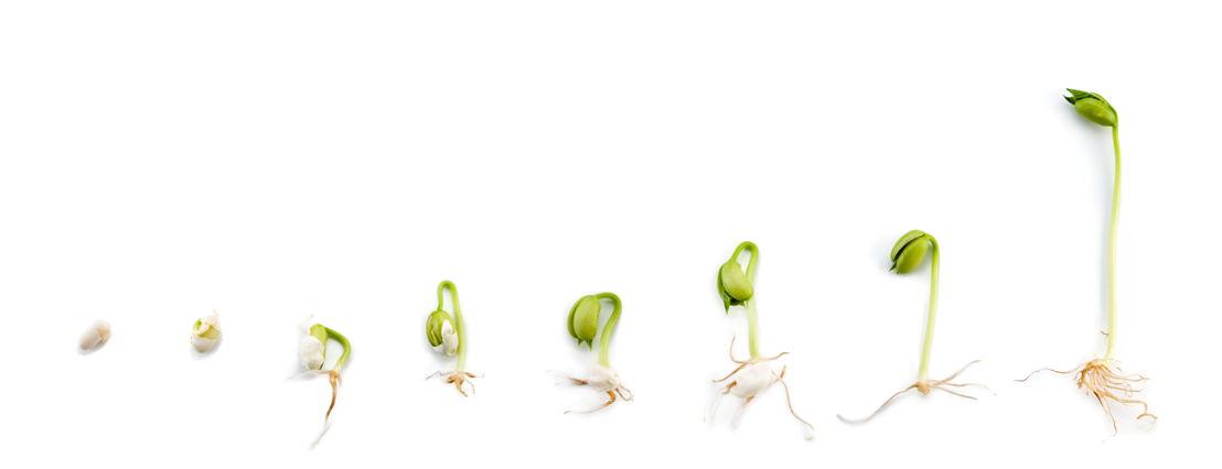 Seeds (photo credit Pike Nurseries)
