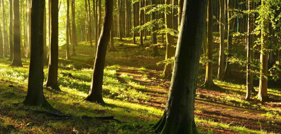 Vlaanderen telt sinds kort 8.000 hectare struinnatuur