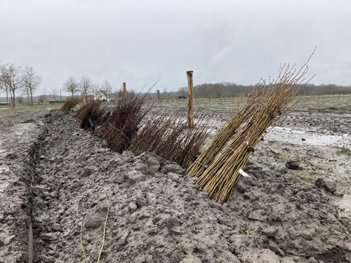 Natuur en Bos zet volop in op bosuitbreiding: 6 hectare extra bos in het Kampveld in Oostkamp