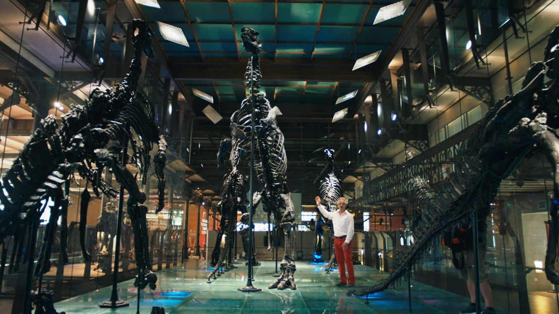 Leven in steen - Hugo De Potter en de Iguanodons